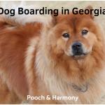 dog boarding in georgia