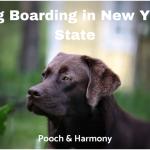 dog boarding in new york state