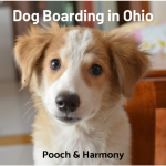 dog boarding in ohio