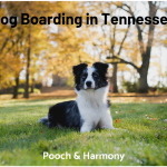 dog boarding in tennessee