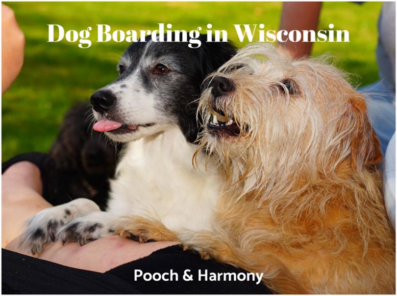 dog boarding in wisconsin
