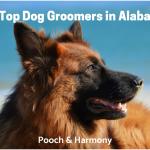 dog groomers in alabama