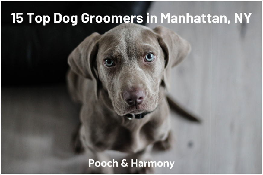 dog groomers in manhattan