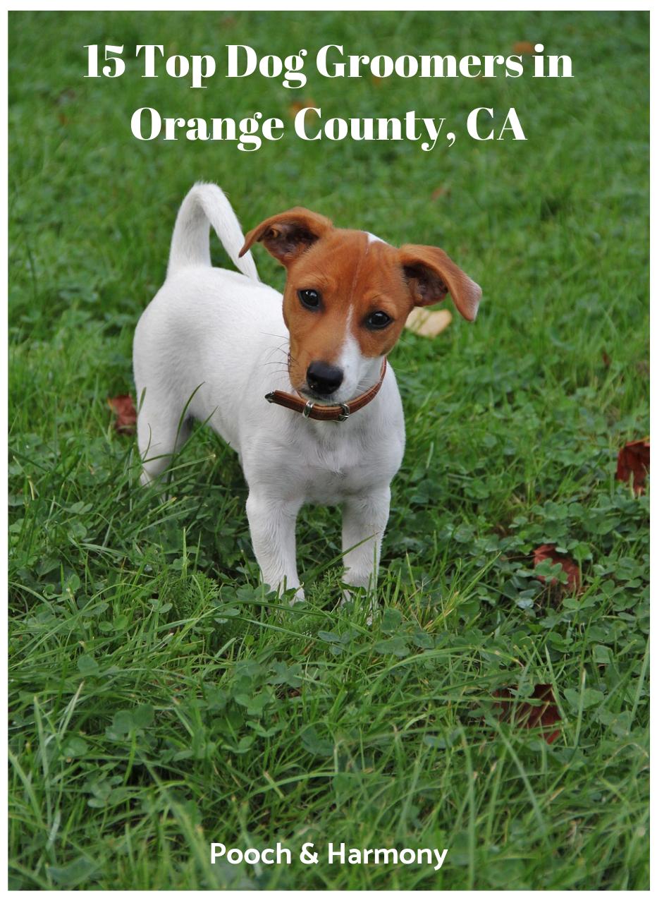 dog groomers in orange county ca