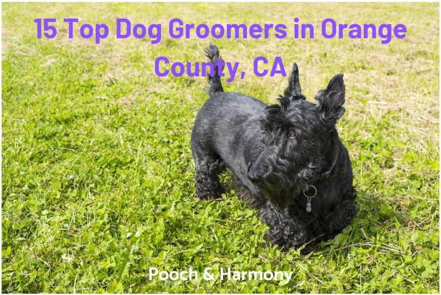 dog groomers in orange county