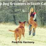 dog groomers in south carolina