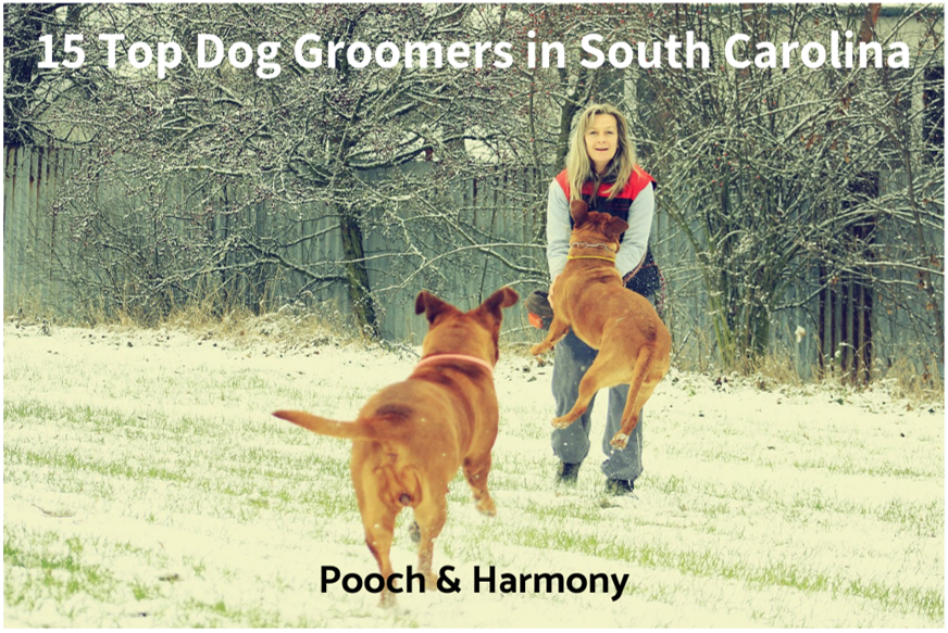 dog groomers in south carolina