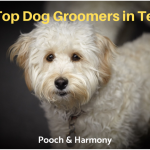 dog groomers in texas