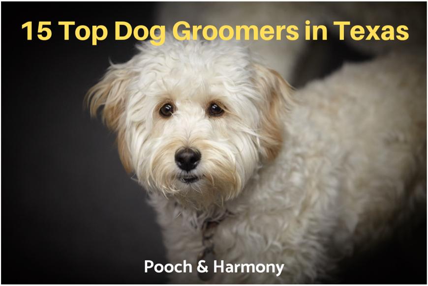 dog groomers in texas