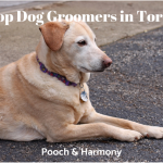 dog groomers in toronto