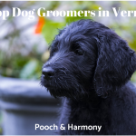 dog groomers in vermont