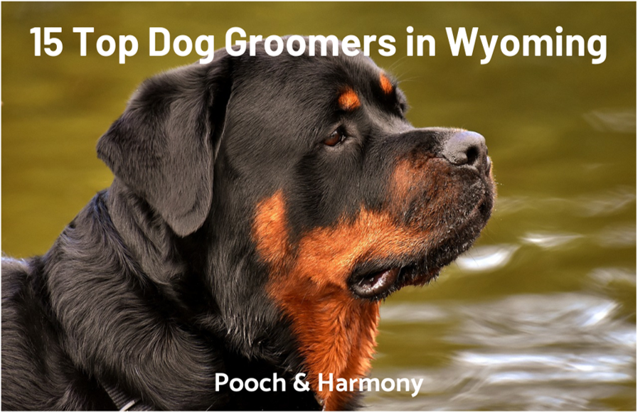 dog groomers in wyoming