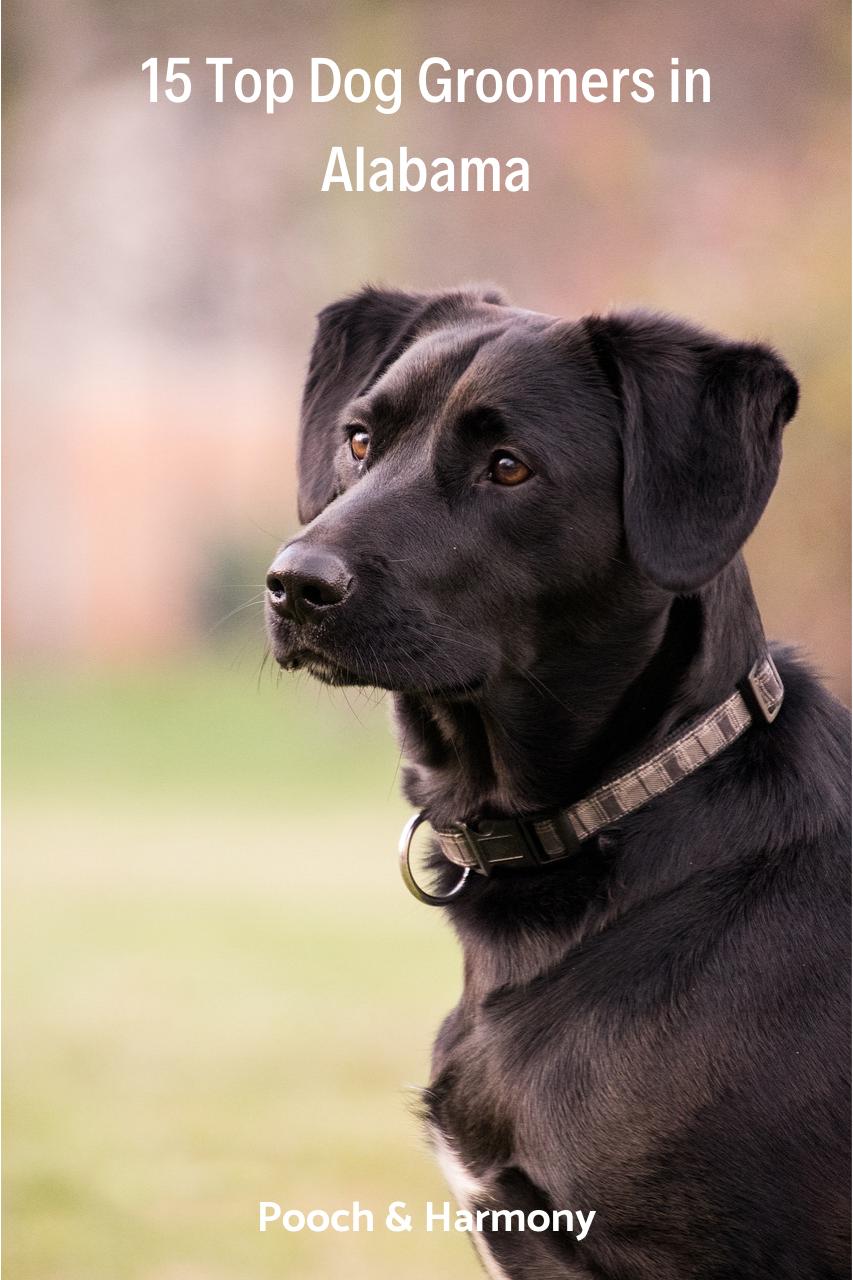 dog grooming in alabama
