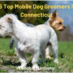 mobile dog groomers in connecticut