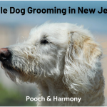 mobile dog grooming in new jersey