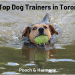 top dog trainers in toronto
