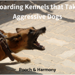 boarding kennels that take aggressive dogs