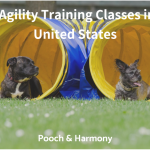 dog agility training classes