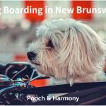 dog boarding in new brunswick