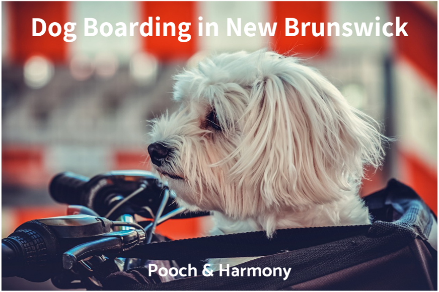 dog boarding in new brunswick