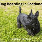 dog boarding in scotland