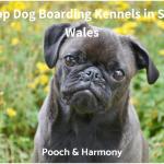 dog boarding kennels in south wales