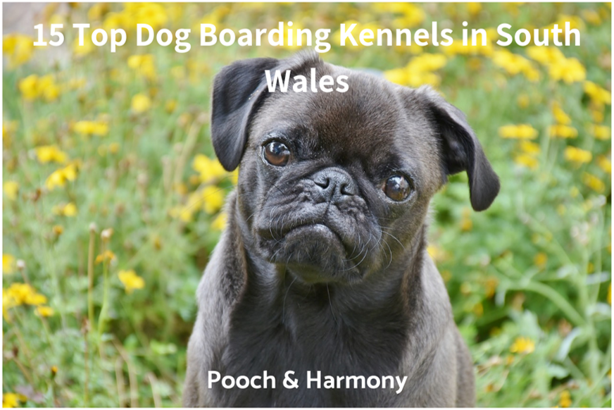 dog boarding kennels in south wales