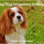 dog groomers in missouri