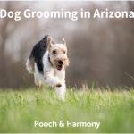 dog grooming in arizona