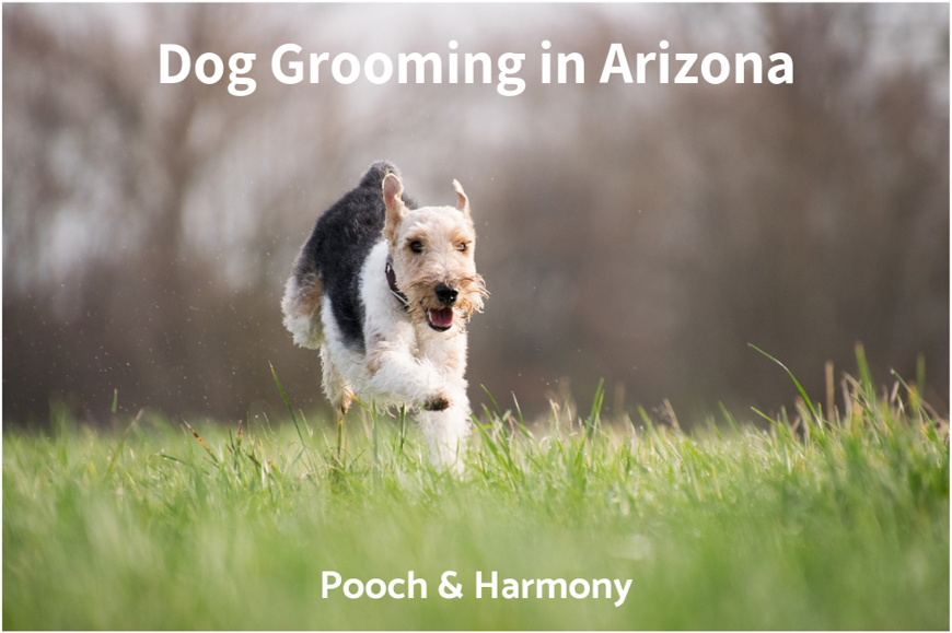 dog grooming in arizona