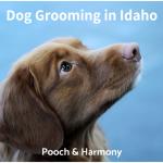 dog grooming in idaho
