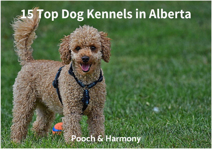 dog kennels in alberta