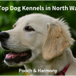 dog kennels in north wales
