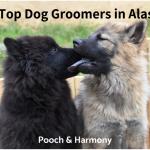 dog groomers in alaska