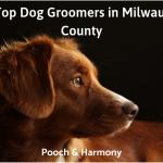 dog groomers in milwaukee county