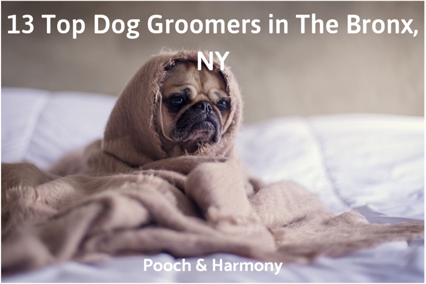 dog groomers in the bronx