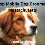 mobile dog groomers in massachusetts