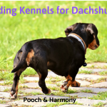 boarding kennels for dachshunds