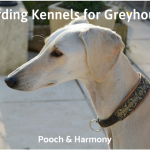 boarding kennels for greyhounds