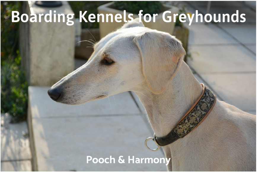 Boarding Kennels For Greyhounds Pooch Harmony
