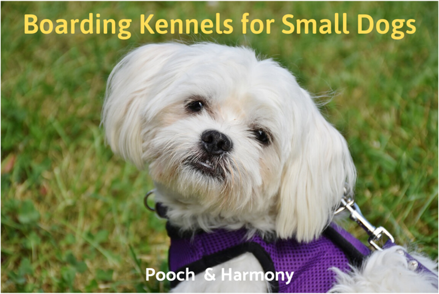 boarding kennels for small dogs