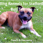 boarding kennels for staffordshire bull terriers