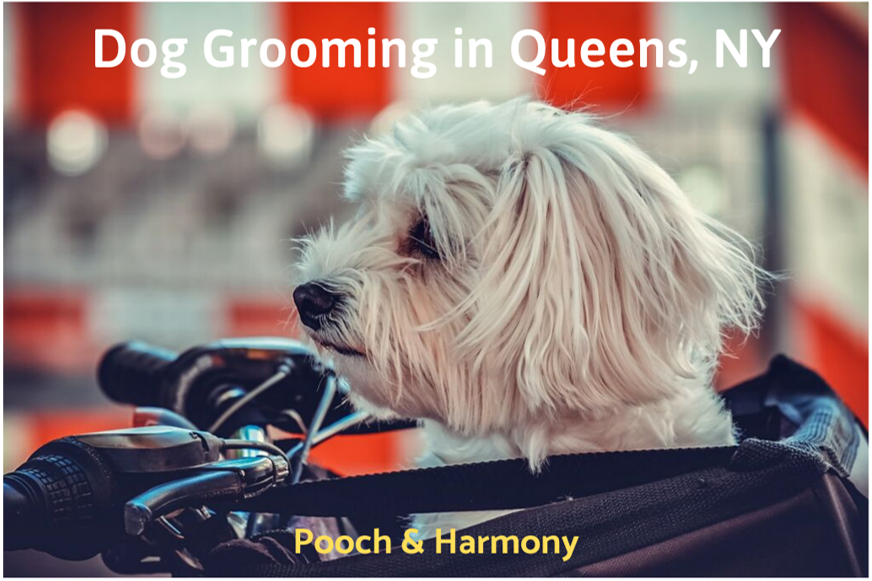 dog grooming in queens, ny