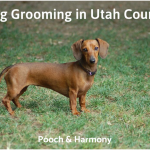 dog grooming in utah county