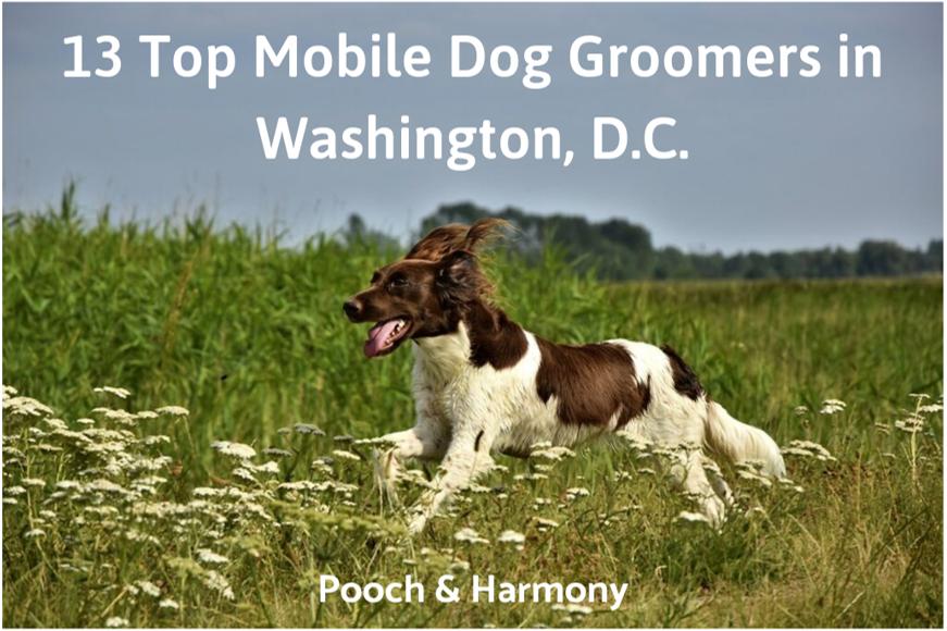 mobile dog groomers in washington, d.c.