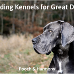 boarding kennels for great danes