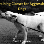 training classes for aggressive dogs