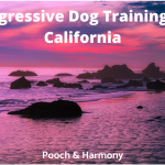 Aggressive Dog Training in California
