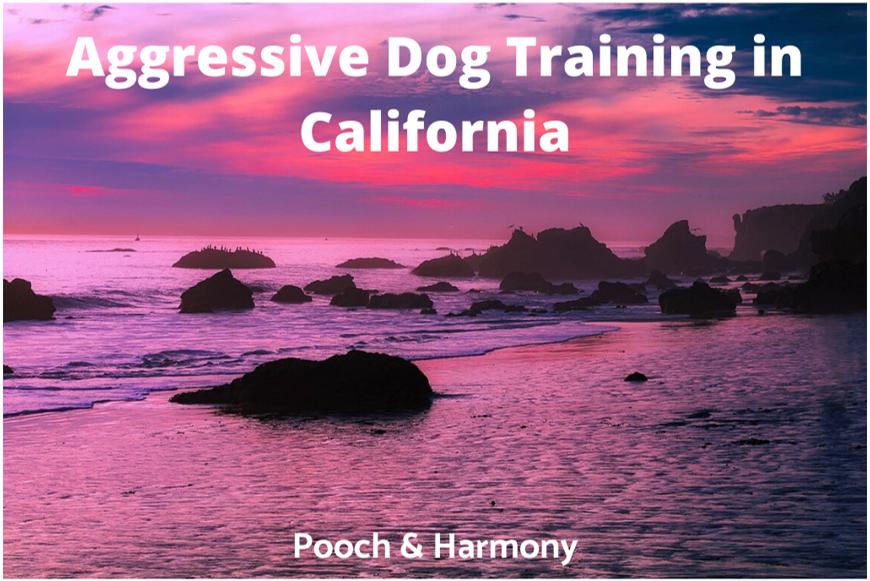 Aggressive Dog Training in California