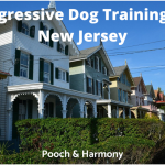 Aggressive Dog Training in New Jersey